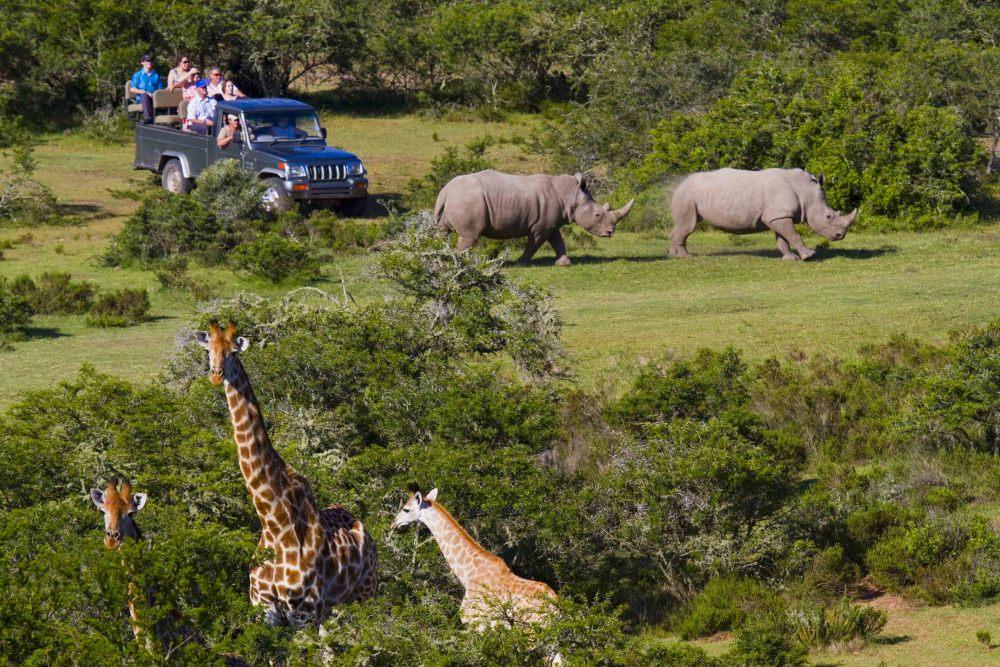 Orongai Africa Safari Travel, Services, International Business and