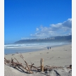 Percy Tours (and transfers) Hermanus (2989)