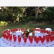 Macnut Farm Wedding & Function Venue (3281)