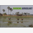 Booking Africa (6843)