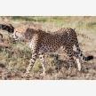 Africa Venture Safaris (7399)