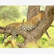 Kruger Wildlife Safaris (9145)