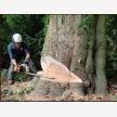 Tree Felling Doctor (17986)