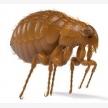 Verminator Pest Control (19705)