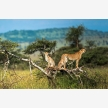 Serengeti Park (20036)