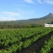 Mitre's Edge Wine Estate (20764)