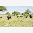 Foot Slopes Tours & Safaris (21075)