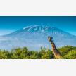 Foot Slopes Tours & Safaris (21079)