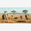 Foot Slopes Tours & Safaris (21080)