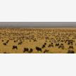 Foot Slopes Tours & Safaris (21082)