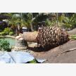 Tree Felling Services   Budget Tree Fellers (23119)