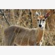 African wildlife exports (25476)