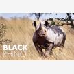 African wildlife exports (25477)