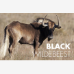 African wildlife exports (25478)
