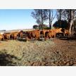 First Choice Farmers (Pty) Ltd (28242)