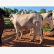 First Choice Farmers (Pty) Ltd (28243)
