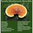 Reishi /Ganoderma Mushroom with Whealthy Life (28256)
