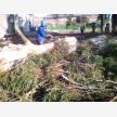 Wilsac Tree Fellers 0738088293 (30195)