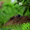 Dpest Pest Control Services (39891)