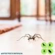 Dpest Pest Control Services (39892)