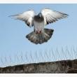 Bird Proofing Cape Town - Logo