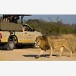 Kruger Wildlife Safaris - Logo