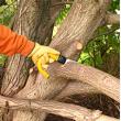 Tree Felling Doctor - Logo