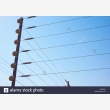 Electric fence repairs Pretoria east 07233280 - Logo