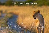 Madikwe South Africa - Logo