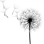 Dandelion Wishes  - Logo