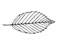 Ecostate Landscaping - Logo