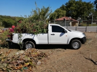 Green Grass Tree Felling and Removals - Logo